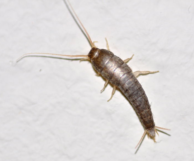 Pictures Of Ojai Termite And Pest Control